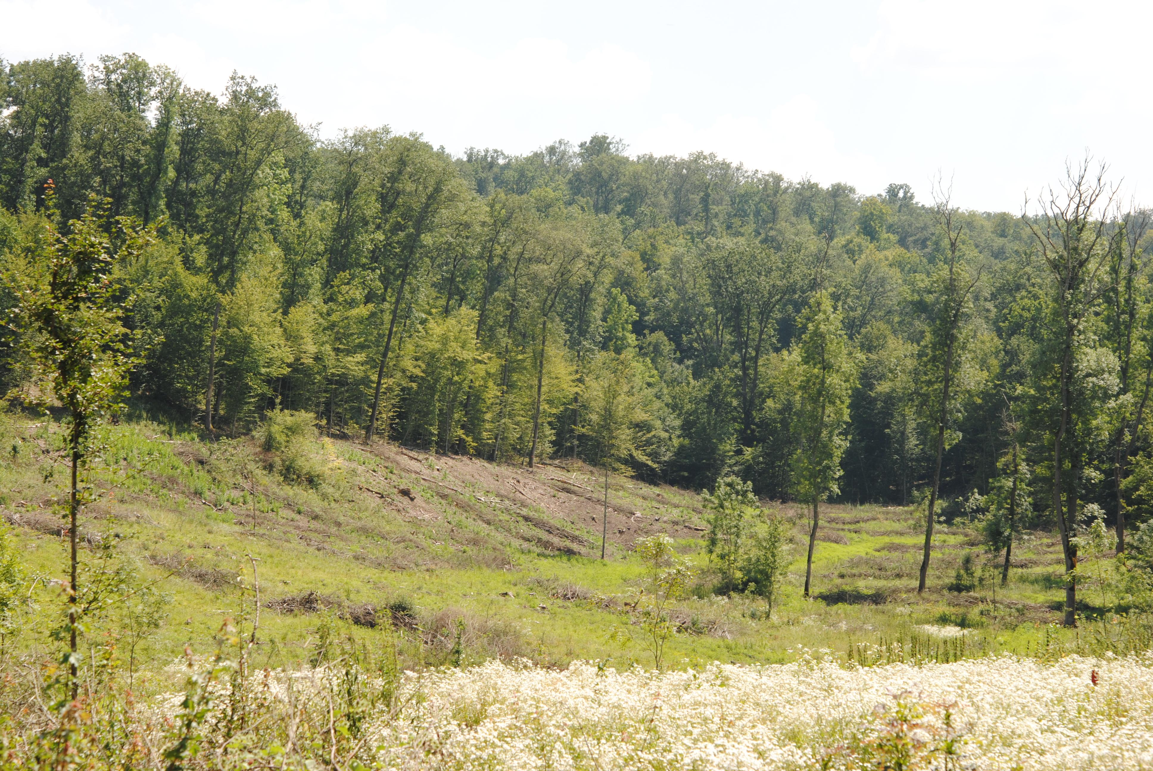 Asociaţia Excelsior a avizat modernizarea drumului din Pădurea Neudorf